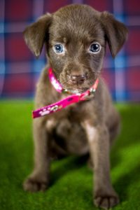 a puppy with a pink collar
