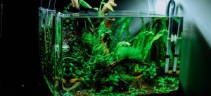 Safely moving a fish tank requires planning