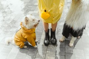 two dogs and a person in boots