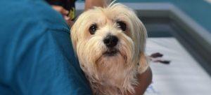 A dog at the vet